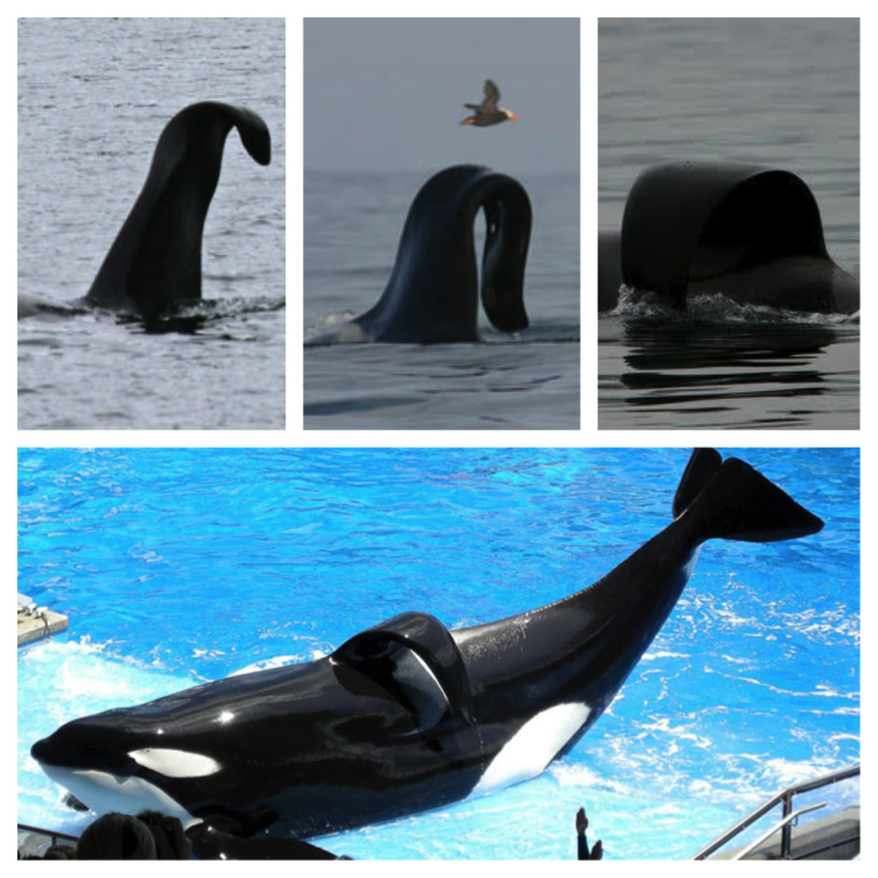 blackfish-debunked-2
