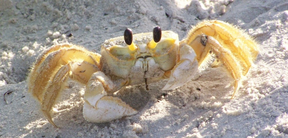 11 Super Cool Facts About Crabs - Awesome Ocean