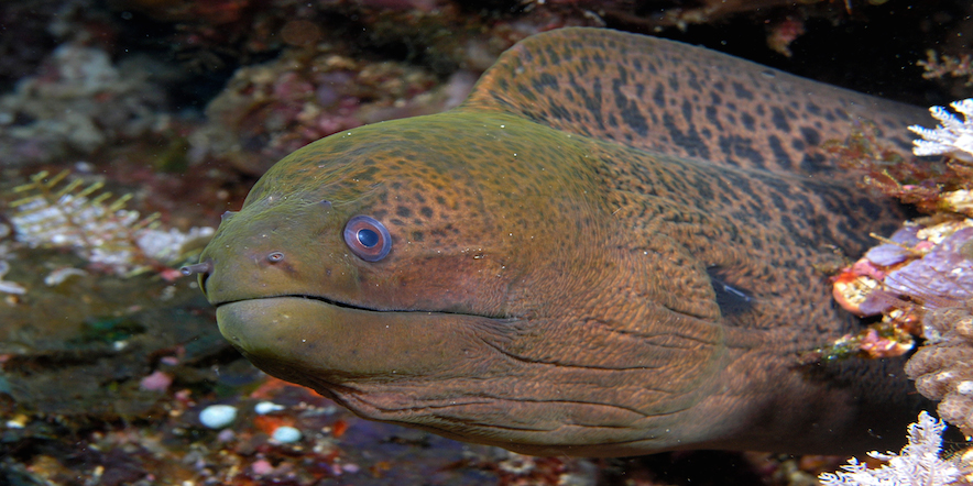 9 Slithery Facts About Eels