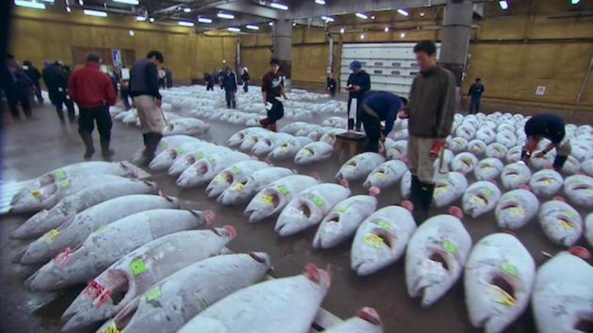 sushi the global catch ocean documentary